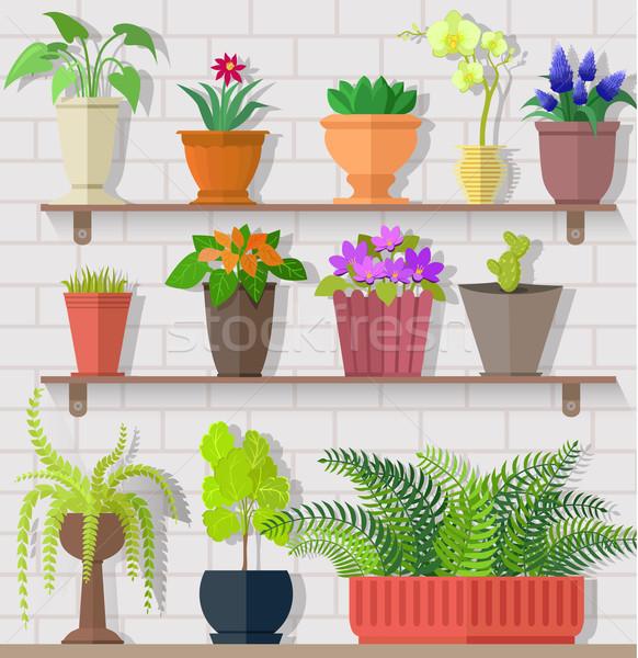 Houseplant Set Design Flat Concept Stock photo © robuart
