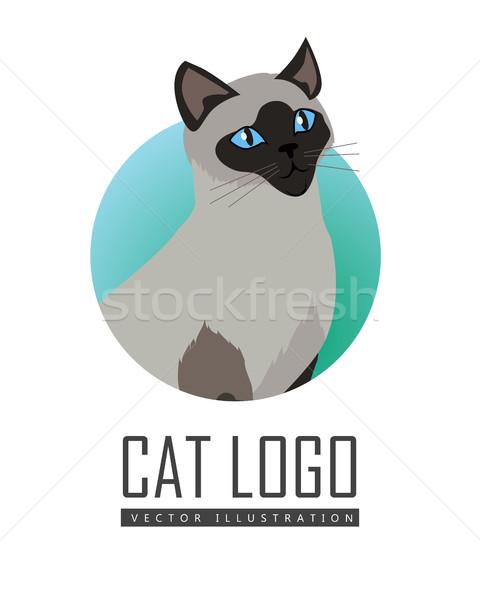 Sziámi macska vektor terv illusztráció fajta aranyos Stock fotó © robuart