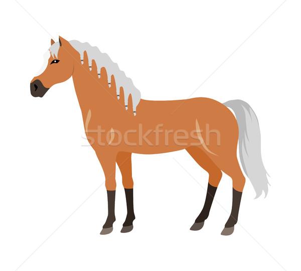 Stock fotó: Ló · terv · piros · fehér · vektor · háziállat