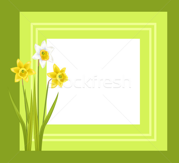 Greeting Card with Framing Daffodil Narcissus Bulbous Stock photo © robuart