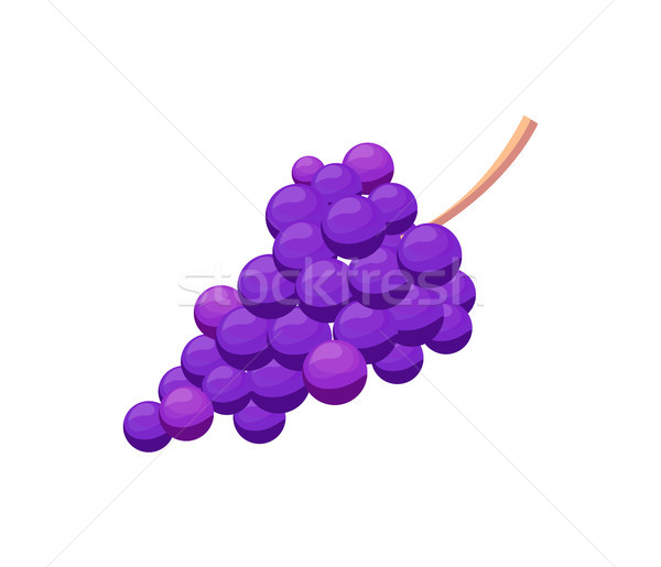 Bunch of Purple Grape Vector Illustration Isolated Stock photo © robuart
