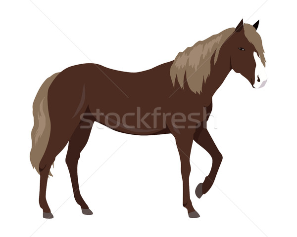Sorrel Horse Vector Illustration in Flat Design Stock photo © robuart