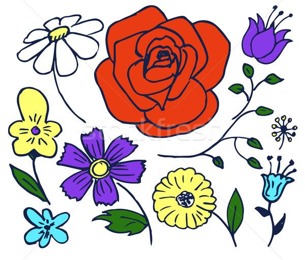 Plants Hand Drawn Elements Set Vector Illustration Stock photo © robuart