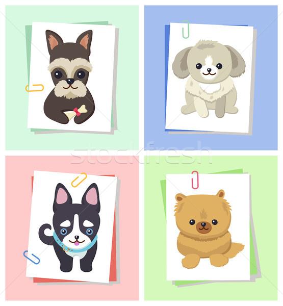 Stockfoto: Honden · gelukkig · gezicht · puppy · vergadering