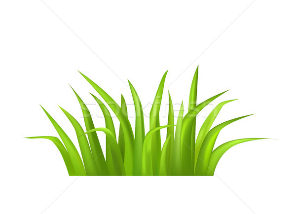 Green Grass Vector Illustration Isolated on White Stock photo © robuart
