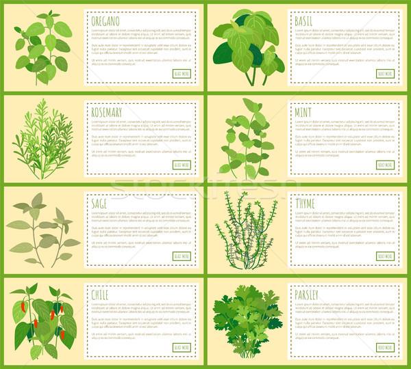 Természetes szárított növénygyűjtemény fűszer leírás bannerek szett Stock fotó © robuart