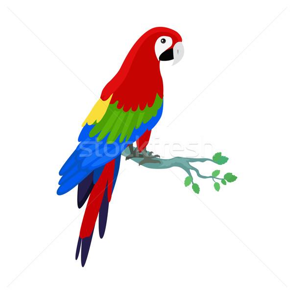 Papagáj terv vektor madarak amazóniai illusztráció Stock fotó © robuart