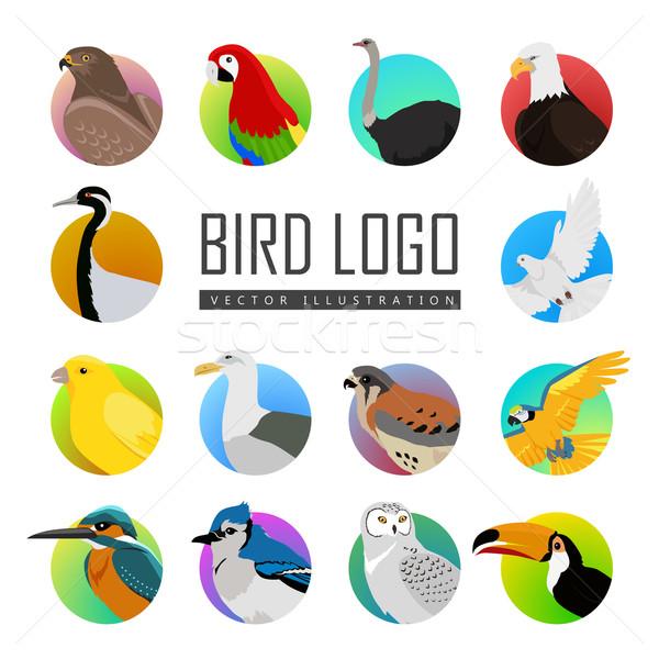 Szett madár logo nagy madarak vektor Stock fotó © robuart