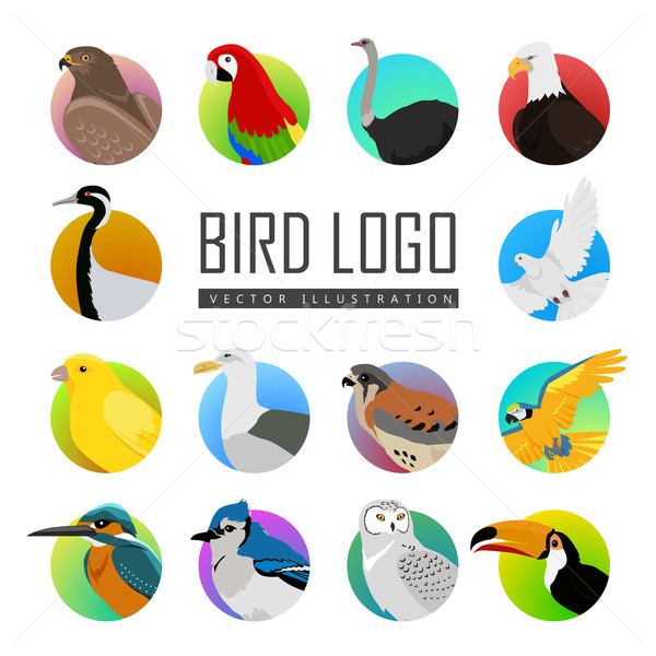 Conjunto pássaro logotipo grande aves vetor Foto stock © robuart