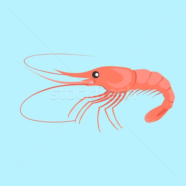 Shrimp Vector Flat Design Illustration Stock photo © robuart