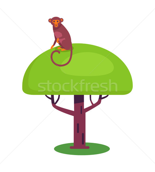 Funny Monkey with Long Tail Sits on Big Leafy Tree Stock photo © robuart