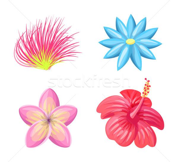 Flores Conjunto Colecao Flor Petalas Ilustracao De Vetor