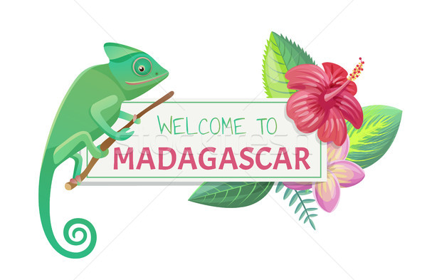 Welcome to Madagascar Title Vector Illustration Stock photo © robuart