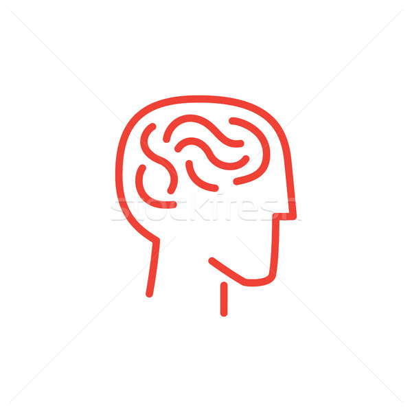 Infographic Human and Brain Vector Illustration Stock photo © robuart