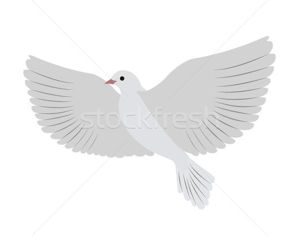 Beyaz güvercin büyük kanatlar albino Stok fotoğraf © robuart