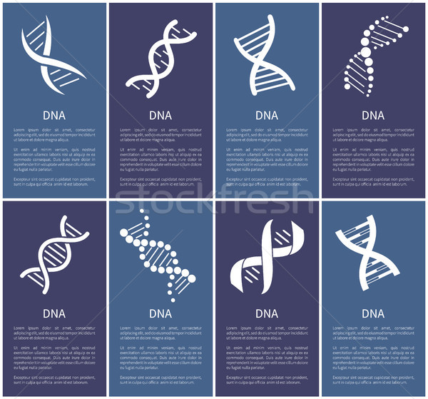 DNA Set of White Spirals Isolated on Blue Backdrop Stock photo © robuart