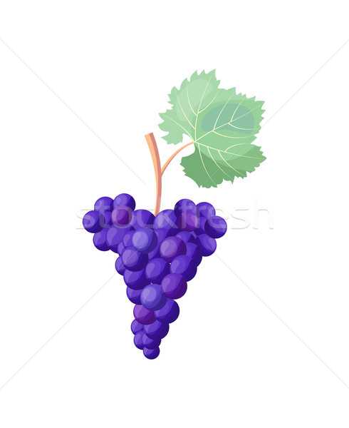 Icon of Red Ripe Grapes on Vector Illustration Stock photo © robuart