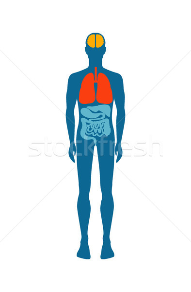 Human Body Infographic Man Vector Illustration Stock photo © robuart