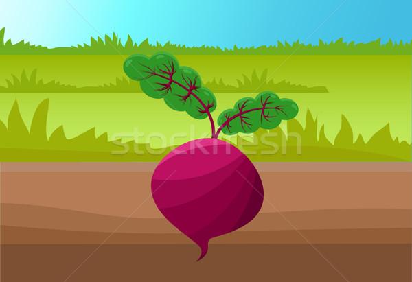 Bieten sjabloon kleurrijk illustratie groen gras bruin Stockfoto © robuart