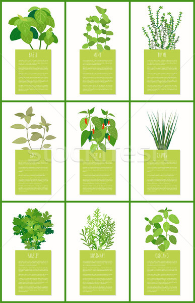 Natürlichen duftenden Gewürze Plakate Set Stock foto © robuart