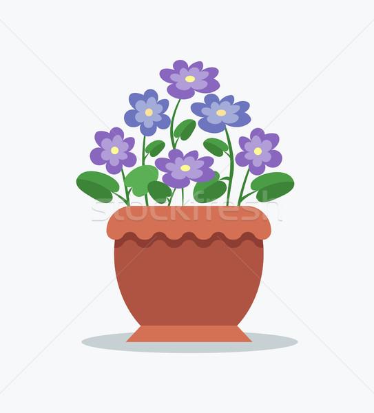 Cariñoso brillante flor grande arcilla olla Foto stock © robuart