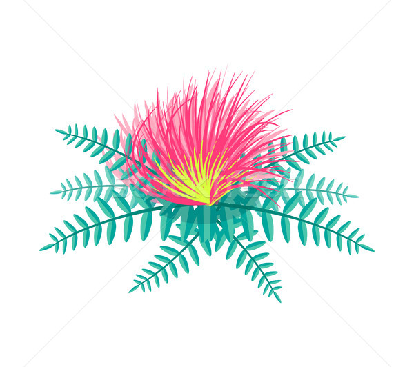 Tropikal çiçek yaprakları pembe renk tomurcuk çiçek Stok fotoğraf © robuart