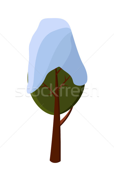 Green Tree Covered with Snow on White Background. Stock photo © robuart