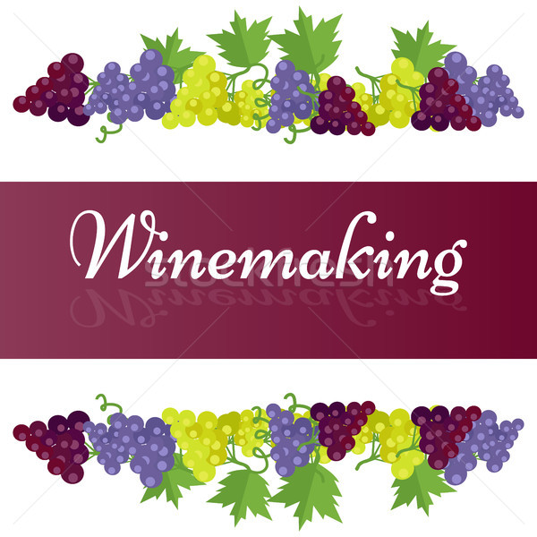 Winemaking Template Poster with Grape Bunches Stock photo © robuart