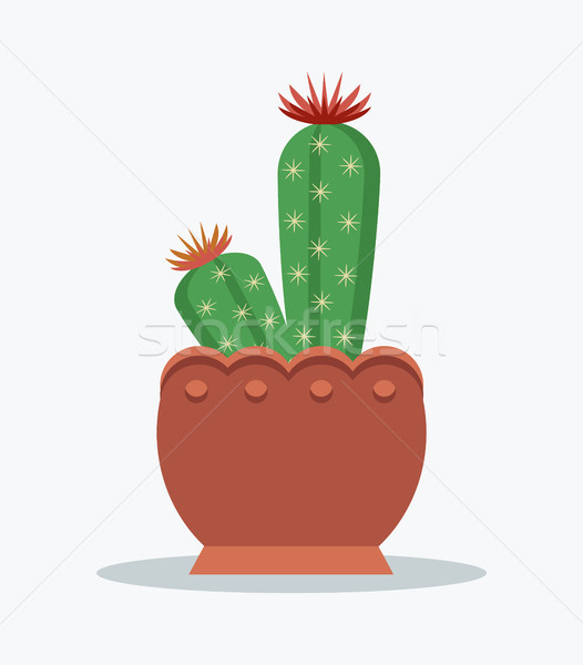Cactus and Flowers in Bloom Vector Illustration Stock photo © robuart
