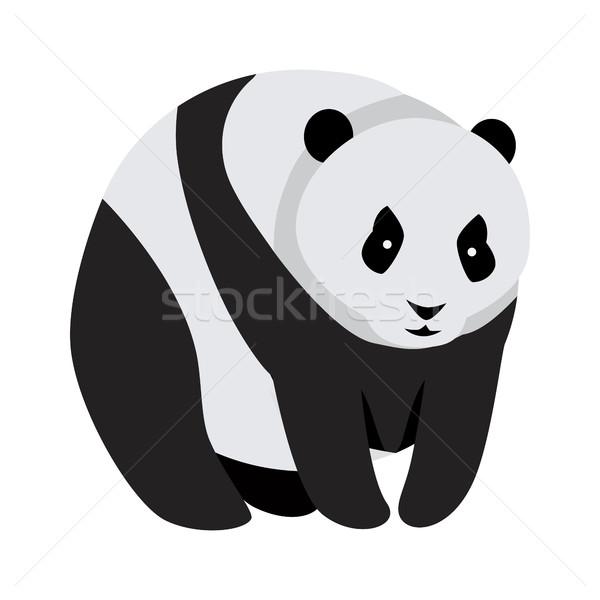 Giant Panda Bear Isolated on White. Stock photo © robuart