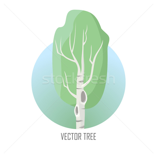 Stock photo: Vector Tree. Birch Isolated on White. Vector
