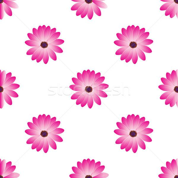 Foto stock: Flor · aislado · dalia · blanco