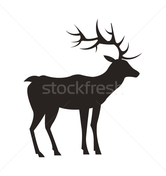 Medium-Sized Adult Male Deer Colorless Black Icon Stock photo © robuart