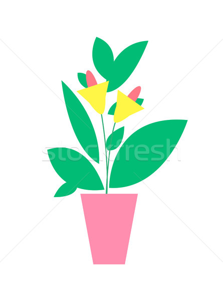 Plant with Flower Poster, Vector Illustration Stock photo © robuart
