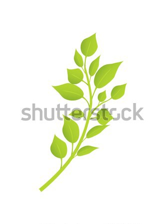 Spring Birch Brunch with Green Leaves Realistic Stock photo © robuart
