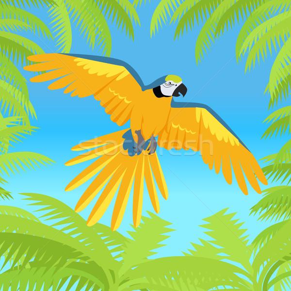 Papegaai ontwerp vector vogels amazone illustratie Stockfoto © robuart