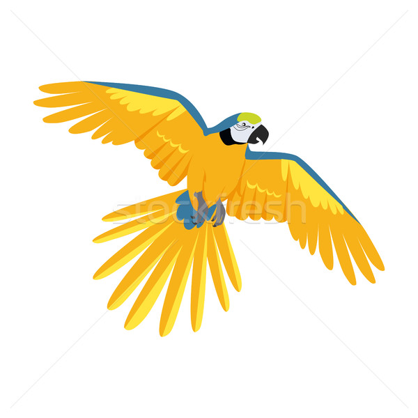 Repülés papagáj terv vektor madarak amazóniai Stock fotó © robuart