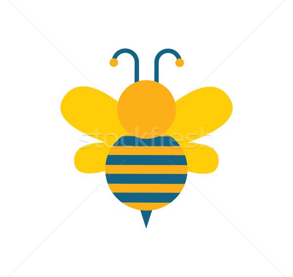 Méh szárnyak csíkok antenna díszek test Stock fotó © robuart