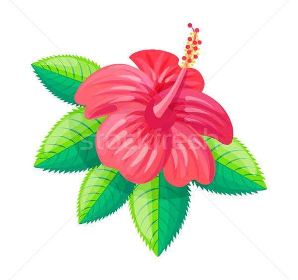 Ebegümeci çiçek tropikal stil yeşillik yeşil yaprakları Stok fotoğraf © robuart