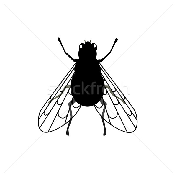 フライ クローズアップ 透明な 翼 昆虫 能力 ストックフォト © robuart