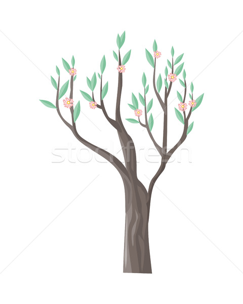 Vector Tree in Blossom with Beautiful Flowers Stock photo © robuart