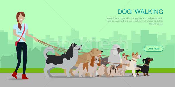 Dog Walking Banner. Woman Walk with Different Dogs Stock photo © robuart