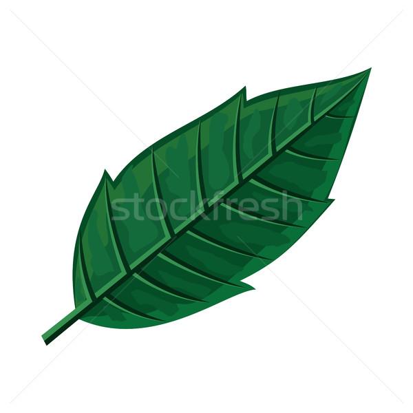 Zdjęcia stock: Zielony · liść · projektu · wiosną · kwitnienia · jesienią · drzew