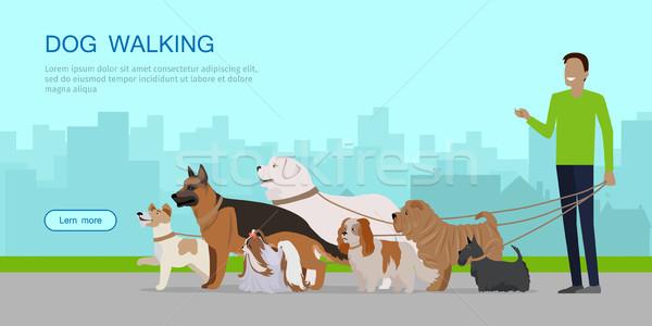 Dog Walking Banner. Man Walks with Puppies Stock photo © robuart
