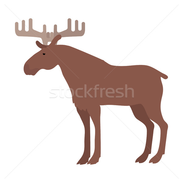 Moose Vector Illustration in Flat Design Stock photo © robuart