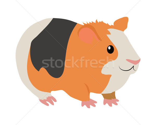 Cavia cartoon icon ontwerp cute Stockfoto © robuart