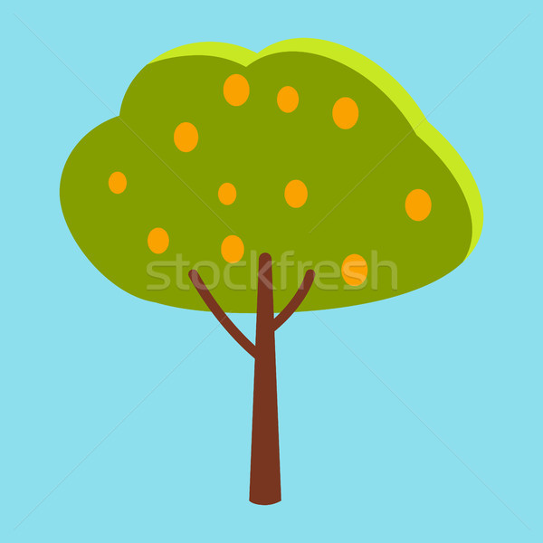 Tall Tree with Green Leaves and Orange Fruits Stock photo © robuart