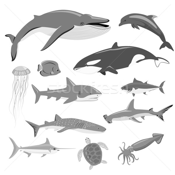 Marine Fauna Set of Aquatic Animals Stock photo © robuart
