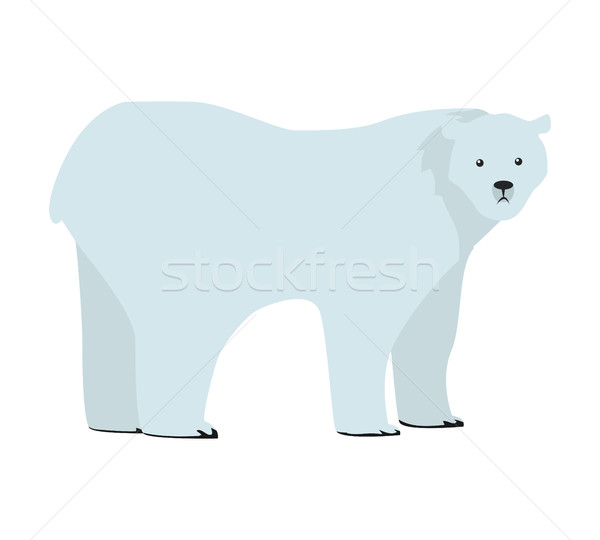 Polar Bear Vector Illustration in Flat Design Stock photo © robuart