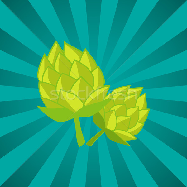 Green Humulus Hop Vector Illustration Isolated Ray Stock photo © robuart